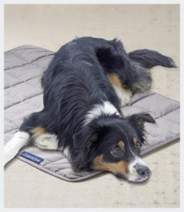 energetix en dieren, energetix hond, hondendeken energetix, deken energetix.